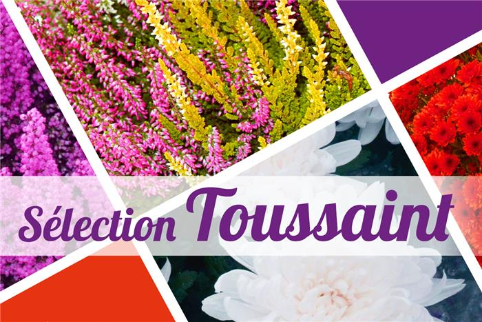 Catalogue plantes toussaint 2016 horticash for Catalogue plantes