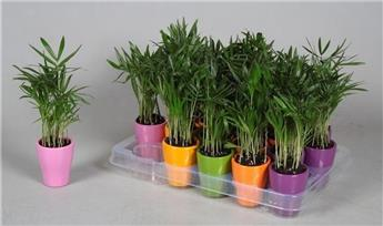 Plante verte d co horticash for Plantes artificielles rennes