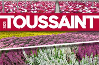 Catalogue Plantes -  Toussaint 2020