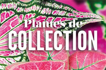 Les plantes de Collection